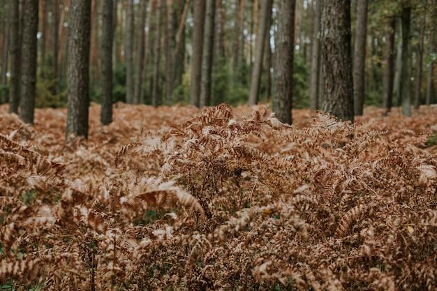 背の高い木と森で成長している乾燥したダチョウのシダの枝のセレクティブフォーカスショット