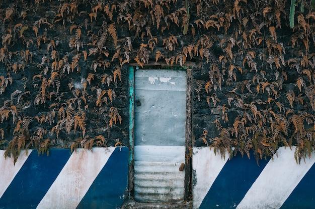 乾燥した葉の背景を持つ古い金属製のドアの水平ショット