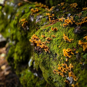完全に苔と黄色の花で覆われた石のクローズアップショット