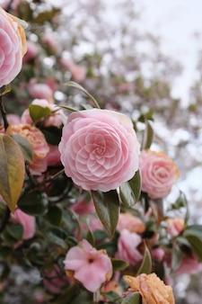昼間でぼやけている美しいピンクの花の選択的なクローズアップショット