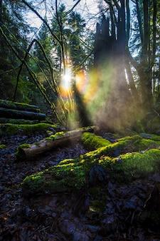 Деревянные бревна покрыты зеленым мхом в лесу с яркими лучами солнца в