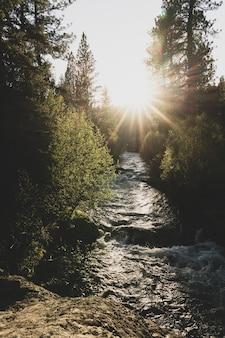 日没時に木々の間を流れる川の流れの垂直ショット