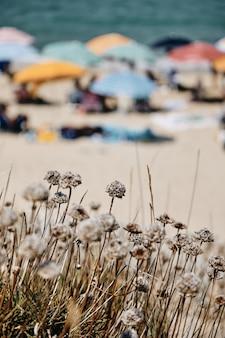 海の近くにぼやけている人々が付いている植物の垂直方向のショット