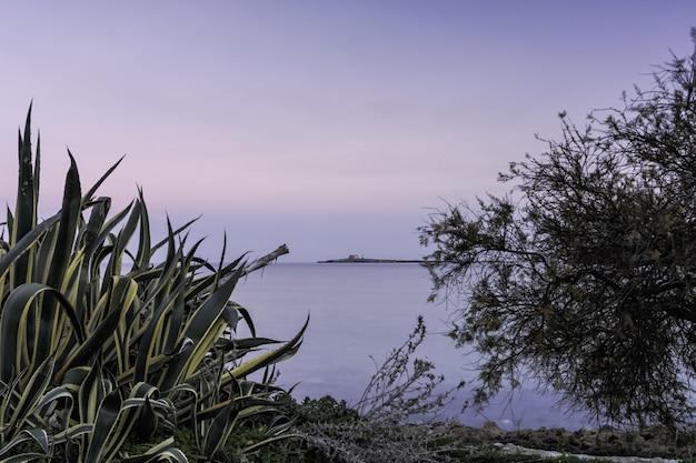 Горизонтальная съемка зеленого растения и голого дерева около красивого моря под ясным небом