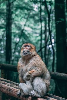 ジャングルの中で木製のフェンスに座っている猿