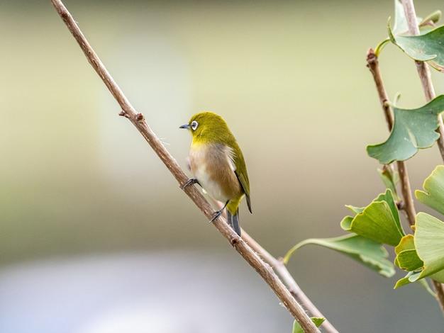 森の真ん中に木の枝に立っているかわいいエキゾチックな鳥のセレクティブフォーカスショット