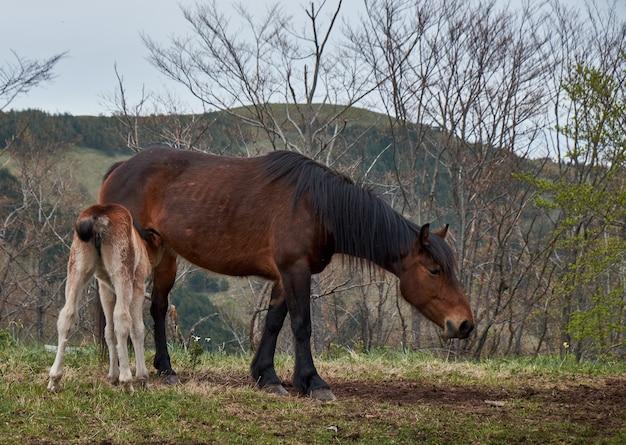 Красивая коричневая лошадь кормит своего жеребенка, стоя в горах