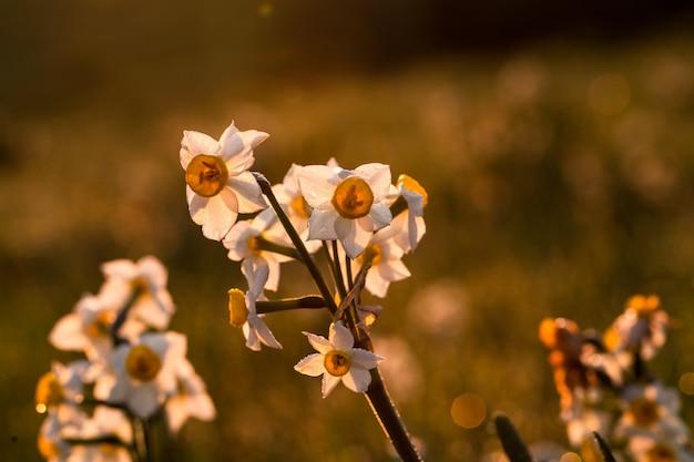 Боярышник обыкновенный, боярышник одноплодный, боярышник моногина,