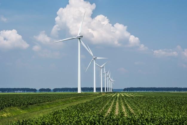 オランダでキャプチャされた芝生の覆われたフィールド上の風力タービンの美しい景色