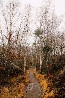 背の高い葉のない木が森の真ん中に湖