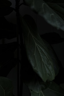 美しい植物のクローズアップ