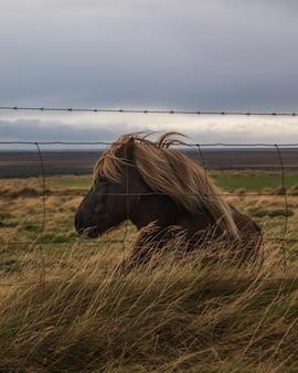 Коричневая лошадь со светлыми волосами сидит на лугу за проволокой