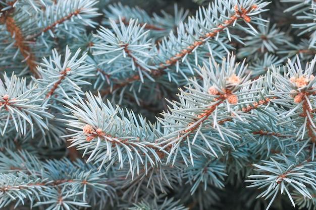 松の木の枝をクローズアップ