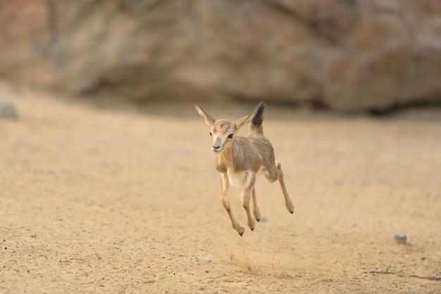 赤ちゃん鹿が飛び回る