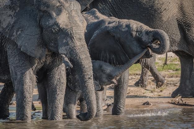 Слоны пьют воду возле озера в дневное время