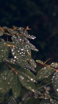 露に覆われた緑の葉の垂直のクローズアップ