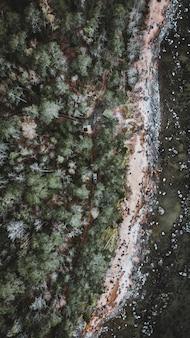 背の高い木々に囲まれた森の中を走る車の垂直アンテナ
