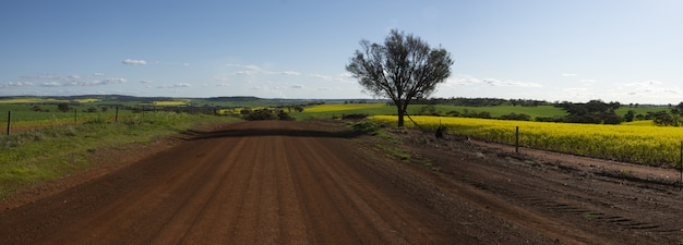 晴れた日に撮影された美しいフィールドのそばの砂利道の広い