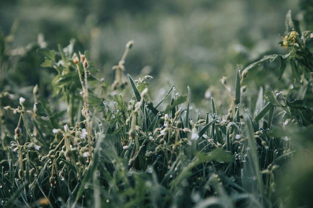 Зеленые растения в поле
