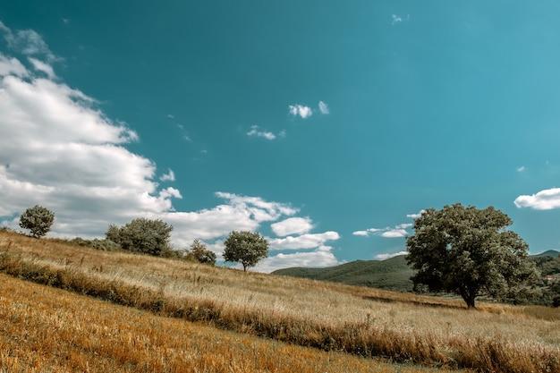 田舎のさまざまな種類の植物がいっぱいのフィールドの美しい風景