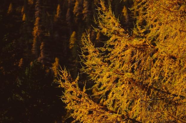 晩秋の木の森の美しい風景-自然な背景に最適