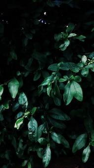 Высокий угол вертикального выстрела зеленых листьев, растущих в середине сада