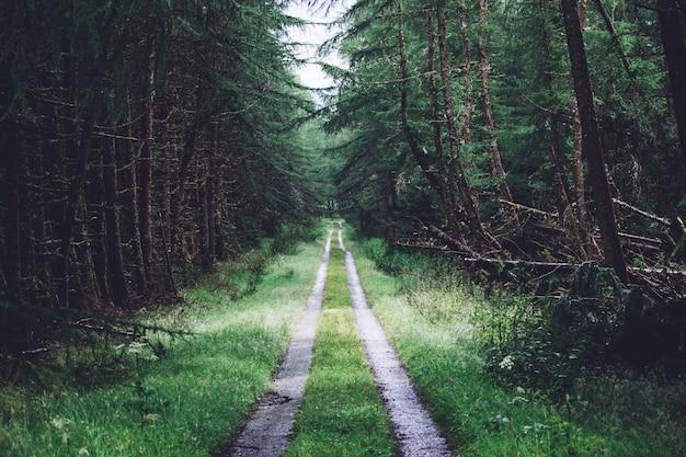 さまざまな種類の緑の植物がいっぱいの森の真ん中にある経路