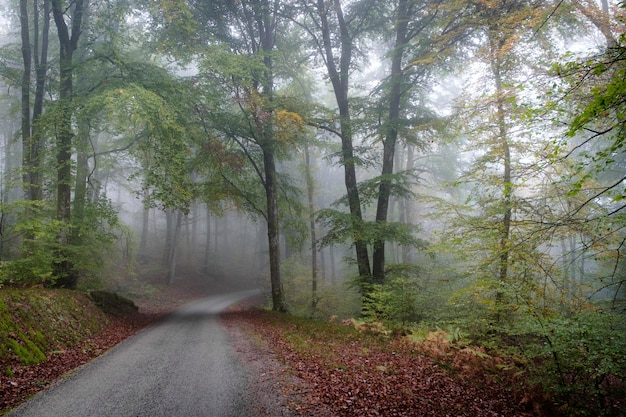 霧に覆われた木の森の真ん中の経路