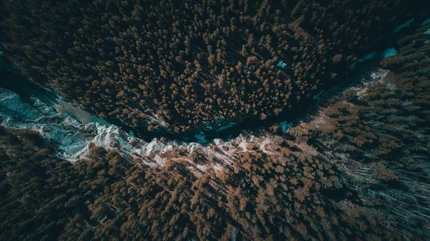 木々でいっぱいの熱帯雨林を流れる川