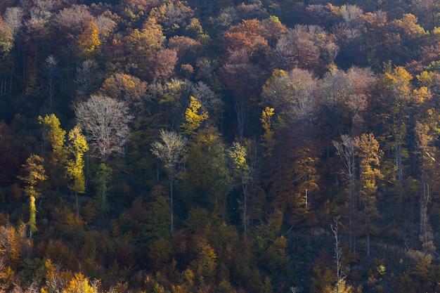 Красочные деревья осенью в горах медведница в загребе, хорватский