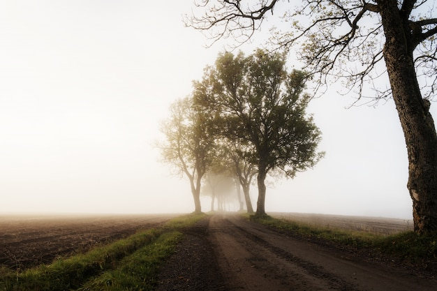 Красивый снимок дороги в сельской местности с деревьями