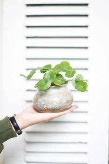 Вертикальный снимок крупным планом человека, держащего зеленое растение в горшке перед белой дверью