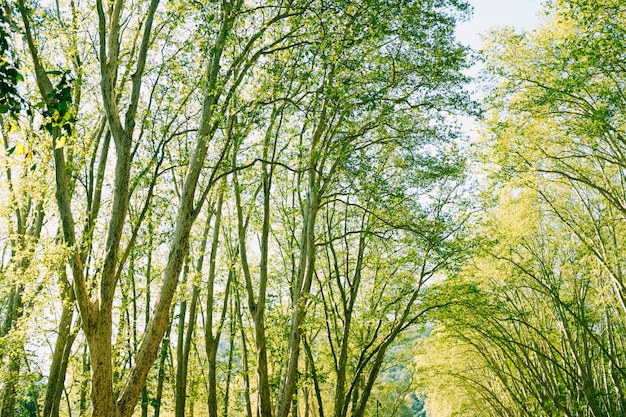 森の中の美しい緑の木々のローアングルショット