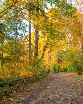 公園内のフィールドに美しいカラフルな木の息をのむビューの垂直方向のショット