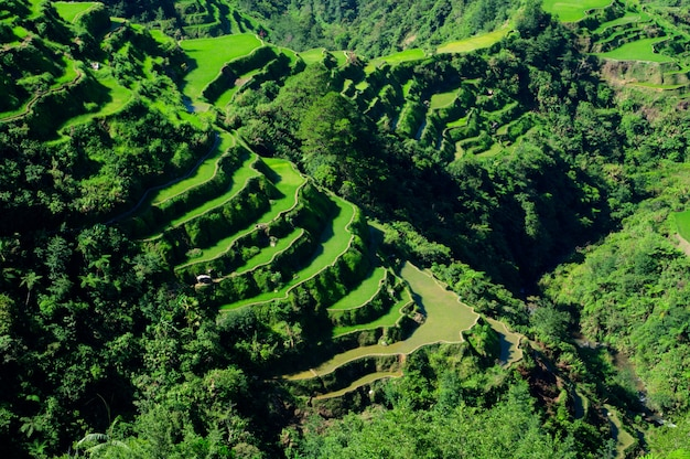 Высокий угол выстрела красивый пейзаж в рисовые террасы банауэ, провинция ифугао, филиппины
