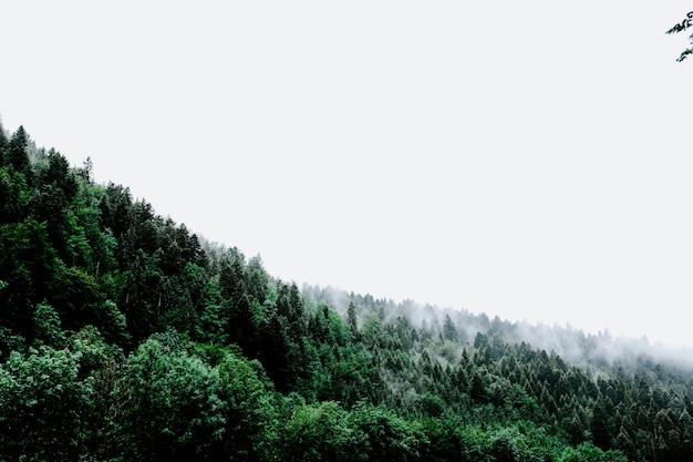 空に触れる緑の風景から出てくる煙の雲