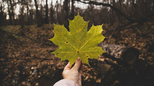 葉を持っている手