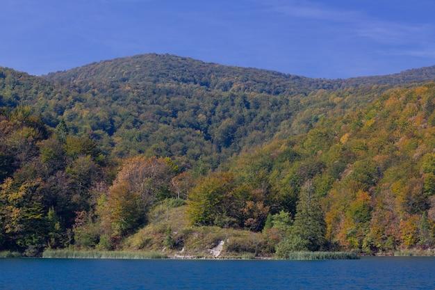 Захватывающий снимок леса на холмах у озера плитвицкие в хорватии