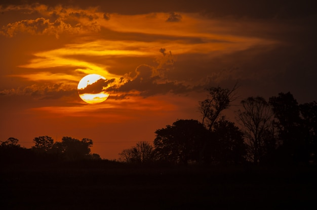 日没時に黄金の空の下で木のシルエットの息をのむようなショット