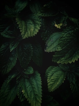庭の真ん中に成長している緑の葉の高角度垂直クローズアップショット