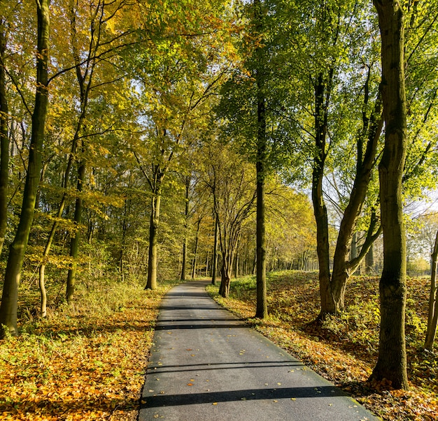 秋のハーグのマデシュタイン公園の自転車道