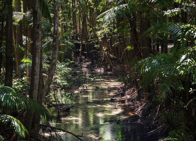 Тропический лес острова фрейзер