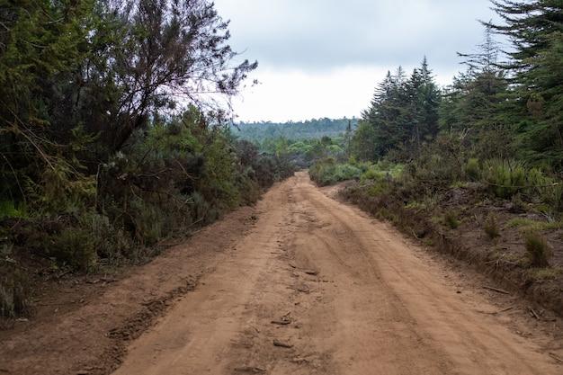 ケニア山の青空の下で木々の間を通る泥だらけの道