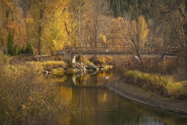 黄色と茶色の葉っぱの木と川に架かる橋の美しい景色