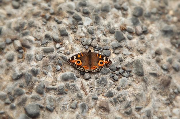 岩の壁に蝶のクローズアップ