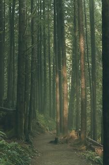 Красивые высокие деревья в лесу