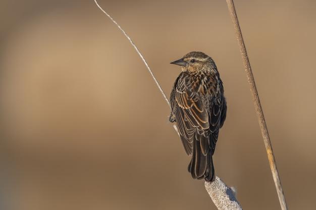 Маленькая птичка сидит на ветке