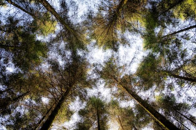 昼間の背景に白い空と緑の葉のある木のローアングルショット