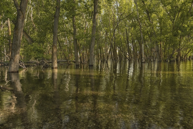 森の水に緑の葉のある木の美しいショット