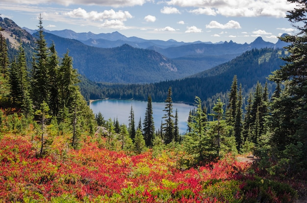 Красивый выстрел из красных цветов возле зеленых деревьев с лесистыми горами на расстоянии